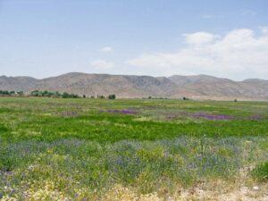 Iran-Tour-Persepolis-Pasargad-Bistoun-Isfahan-Shiraz-Shush-Isfahan-Hamadan-Fieldsat-Pasargad