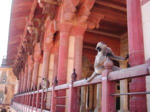 monkeys in the temple