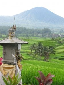 Bali rice fields Indonesia tour Malcolm David Eckel tour archaeology tour