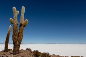 cactus Uyuni salt flats Bolivia Far Horizons archaeology tour