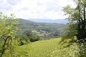 Tuscany hills Far Horizons Italy archaeology tour